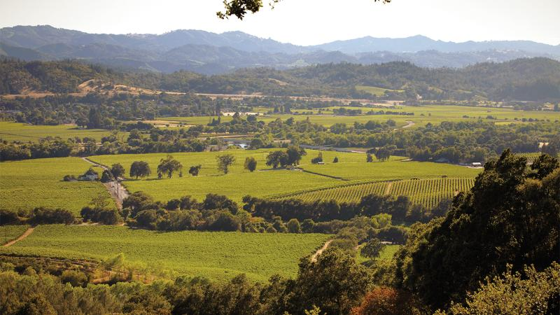 Rodney Strong makes a wide variety of reds and whites from Sonoma County.