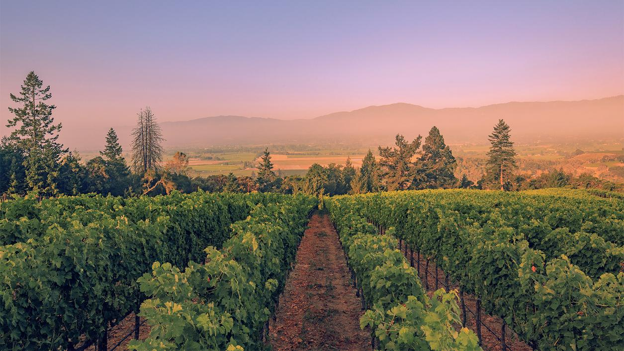 8 Intriguing California Red Blends
