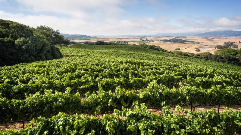 Rodgers Creek Vineyard, from which Sojourn makes a single-vineyard Pinot Noir, sits at 300 feet above sea level between Sonoma and Petaluma.