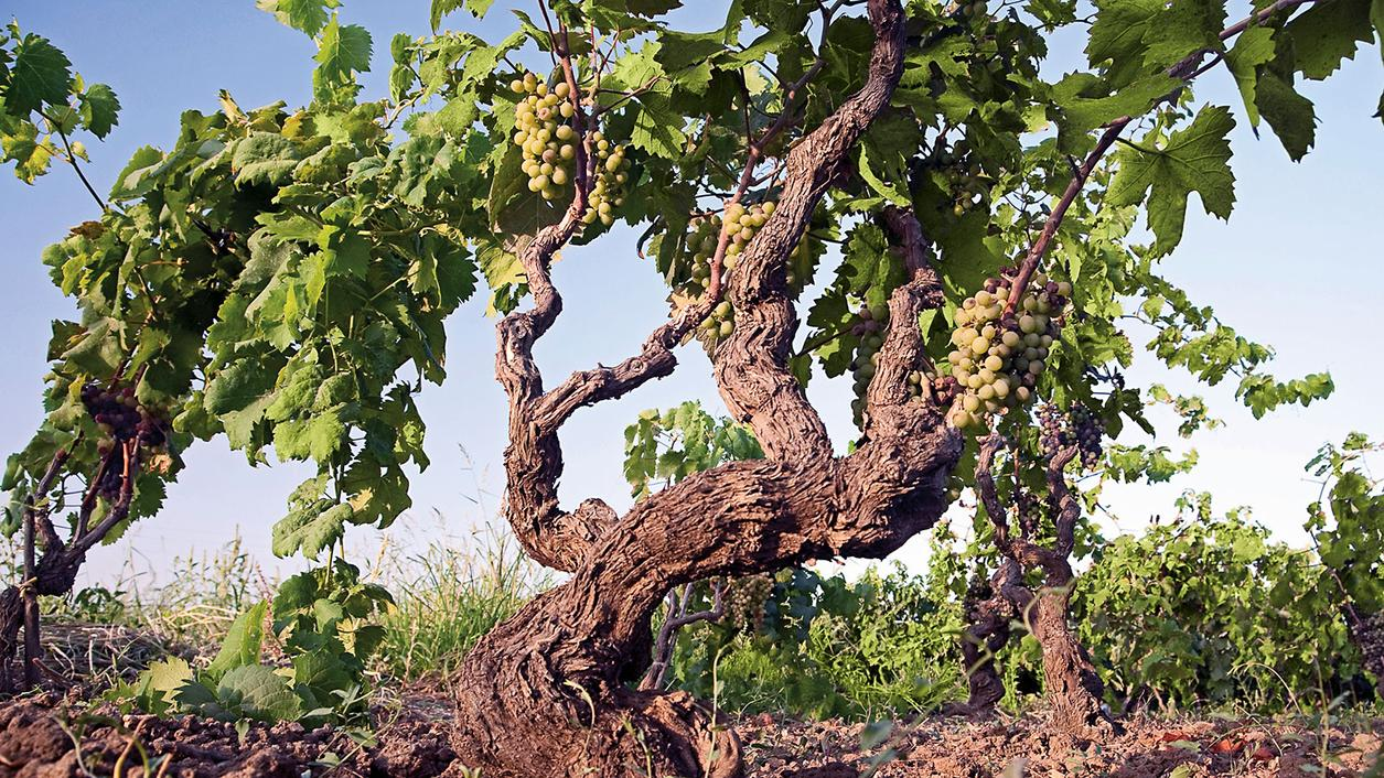 Wine Tip: Wineries to Know in Southern Italy | Wine Spectator