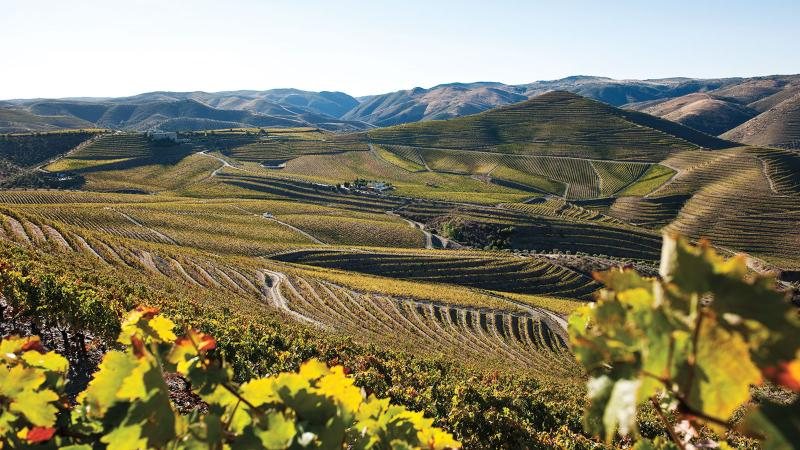 Wine Tip: Discover Portugal's Shining White Wines