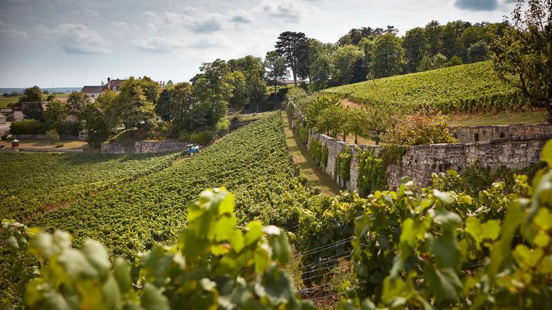 Domaine de l'Arlot in Burgundy, France