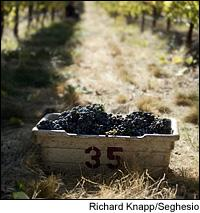 California winemakers saw a smaller harvest, but are expecting concentrated wines.