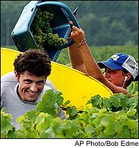 Many French regions are picking grapes, but would prefer to be doing so under sunnier skies.
