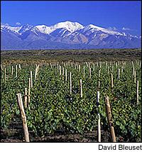 Nicolás Catena's latest entry in the high-end market is the classic Malbec Argentino 2004.