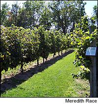 Anthony Road is among the Finger Lakes wineries quietly building a track record of quality.