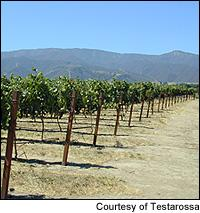 California's Santa Rita Hills appellation lies in the western part of the Santa Ynez Valley.