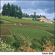 Domaine Drouhin helped focus the world's attention on Willamette Valley, thanks to the Drouhin family's reputation in Burgundy.
