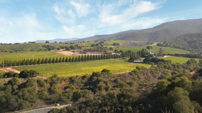 9 Chardonnays from Up and Down California