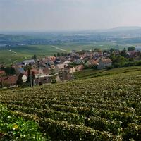 Champagne Nicolas Feuillatte's growers own 5,100 acres in some of the French region's top terroirs.