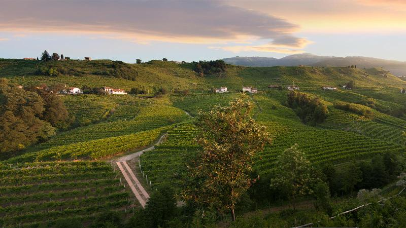 UNESCO Recognizes Prosecco Wine Areas as World Heritage Site