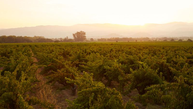 H.W. Crabb planted the first parcel of the To Kalon Vineyard in Napa Valley in 1868.