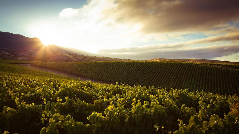 La Crema's Monterey vineyards get abundant sunshine, tempered by fog and cool air from the nearby Pacific.