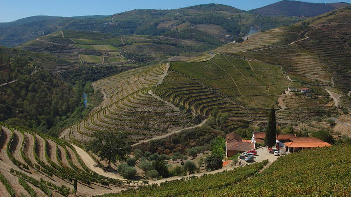 Douro Deal: Portugal's Quinta do Noval Buys Neighboring Wine Estate Quinta do Passadouro