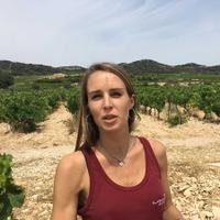 Domaine de la Mordorée, now co-managed by Ambre Delorme, is one of the leading producers in Tavel.