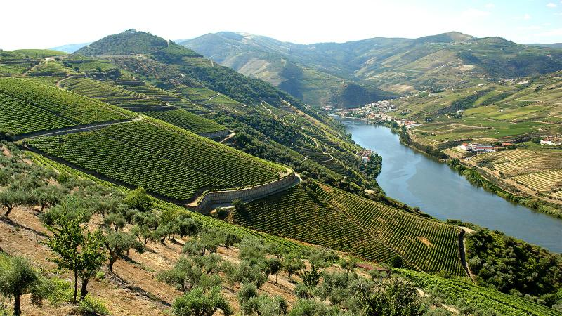 8 Fruit-Forward Douro Wines