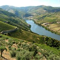 Quinta das Carvalhas is located on the left bank of the Douro River.