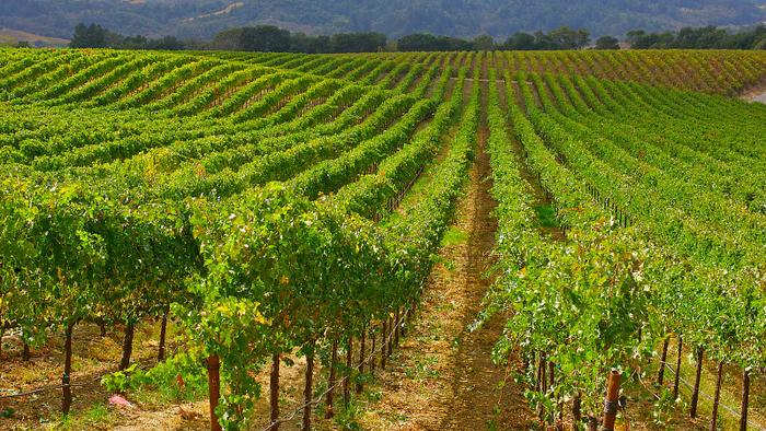 9 California Merlots to Drink this Week