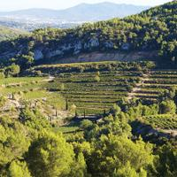 Château de Pibarnon is a producer to know in the premier Provence appellation of Bandol.