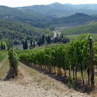Poggerino is a family-owned, organic winery located in the historic Chianti Classico zone.
