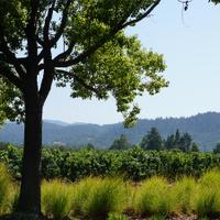 St. Supéry makes wines from Sauvignon Blanc, Chardonnay and red Bordeaux varieties in Napa Valley.