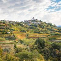 Hillside vineyards in Brda, Slovenia