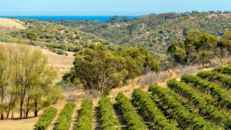 Chapel Hill winery is located on the edge of Onkaparinga River National Park, with views of Gulf St.-Vincent.