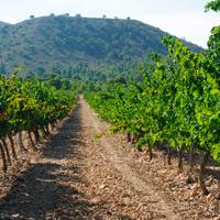 The wines of Bodegas Luzón are a good introduction to the bounty of Jumilla.