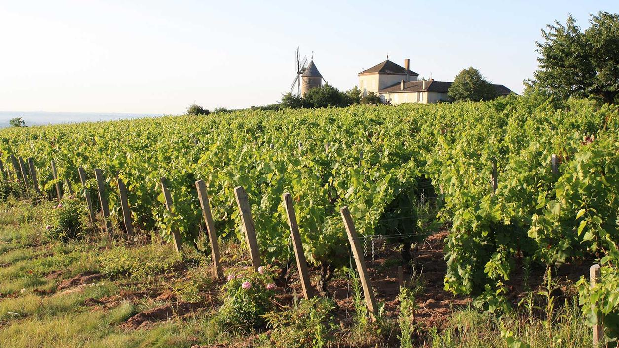 9 Beaujolais Reds to Drink After Labor Day