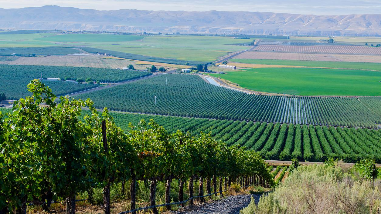 9 Outstanding Cabernets and Merlots from Washington