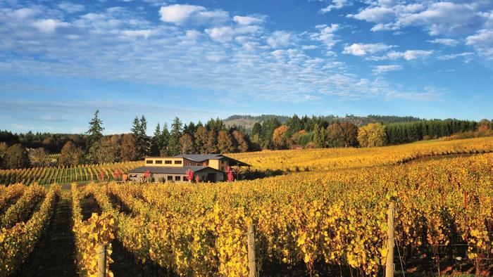 9 Top-Rated Oregon Pinot Noirs for Fall