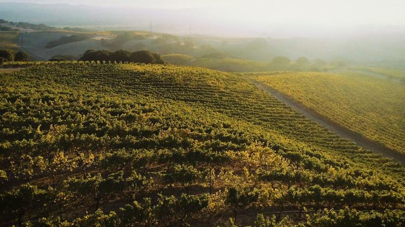 These foggy vineyards of Sonoma are home to Sojourn Cellars.