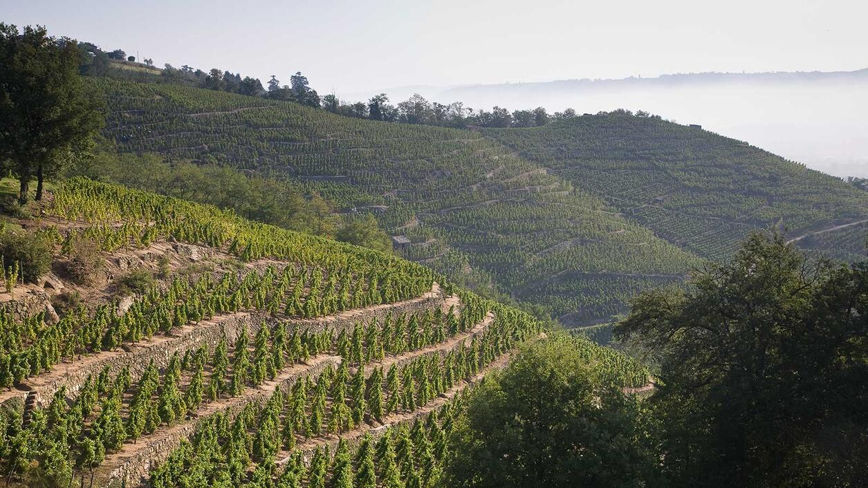 Old Reliable: Rhône Mainstay E. Guigal's 2017 Vintage
