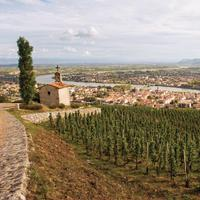 Chapoutier's Syrah vineyards atop the hill of Hermitage