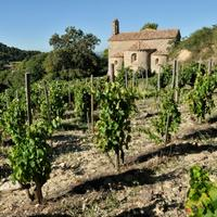 Few estates have done as much as for the reputation of the Southern Rhône's Gigondas appellation as Château de St. Cosme.