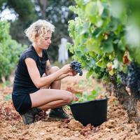 Domaine de I'lle grows both red and white grapes, and is best known for its rosé.