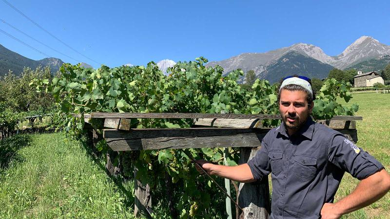 Nathan Pavese shows off his family's own-rooted Prié Blanc vines in Blanc de Morgex et de La Salle.