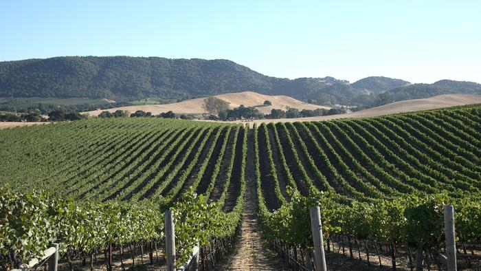 9 California Pinot Noirs from the Grape's Top Regions