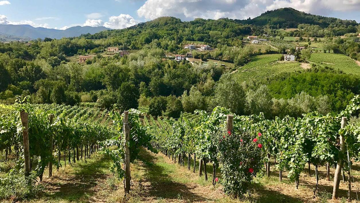 8 Lesser-Known Italian Reds You Should Be Drinking