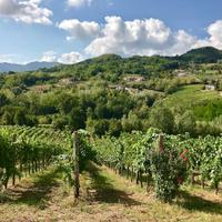 Donnachiara has been a quality leader in the southern region of Campania since the winery was founded in 2005.
