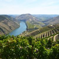 The founders of Duorum started the project 12 years ago by planting 370 acres of indigenous varieties in the Douro Valley.