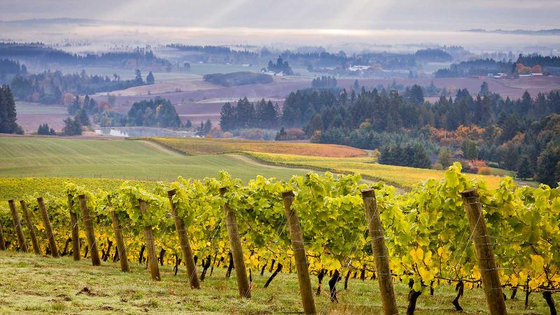 8 Oregon Chardonnays at 90+ Points