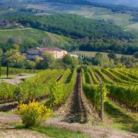 Castelli del Grevepesa is a cooperative of more than 120 winegrowers.