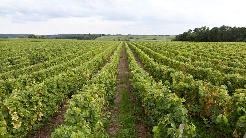 Vouvray vineyard