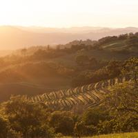 Dry Creek Valley's hillside vineyards are undamaged, and its wineries are open for business.