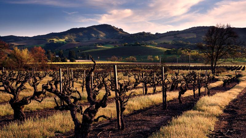 Pagani Ranch vineyards are a prime source for old-vine Zinfandel in Sonoma Valley.