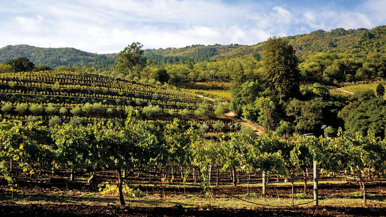 9 Wines that Are Sonoma Strong