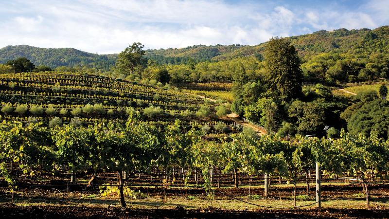 Benziger was founded in 1980 and is based in Sonoma Valley, making a wide variety of wines from different grapes.