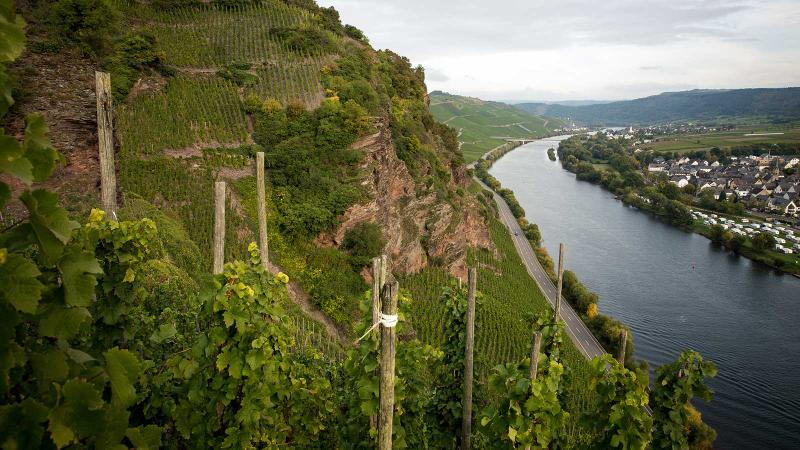 The view from Dr. Loosen's Ürziger Würzgarten vineyard