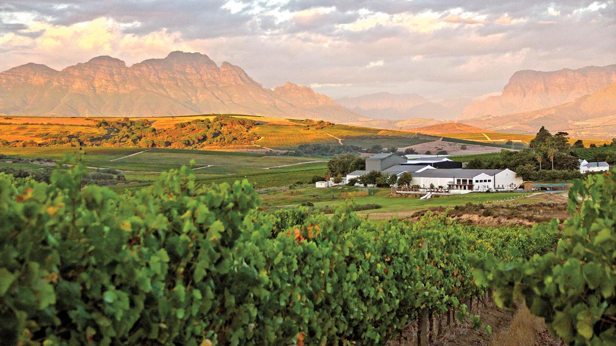 9 Refreshing South African Whites for $25 or Less